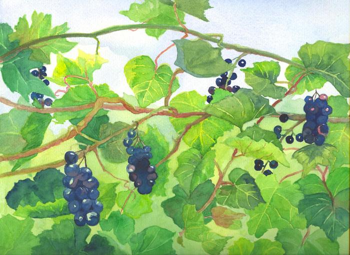jean-cannon-grapevine