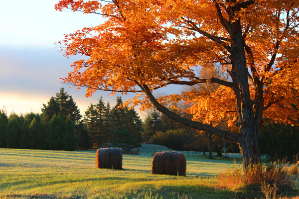 jessica-remmey-fall-serenity